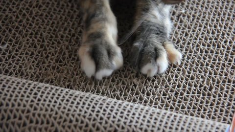 Cat Scratching. Claws On The Scratching Post