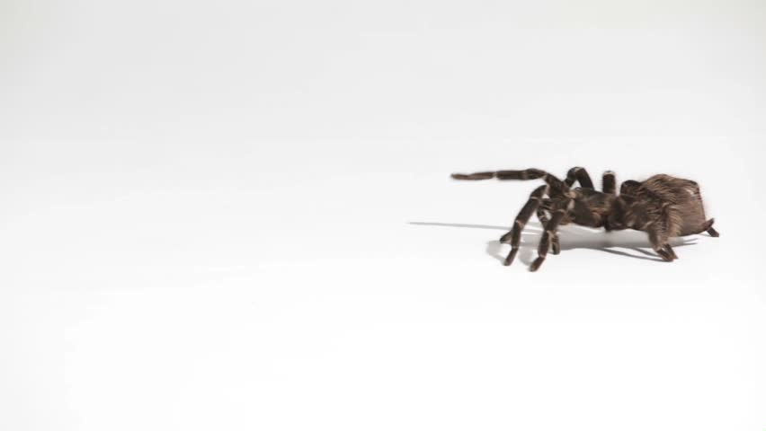 spider crawls through the picture on white background #29267737
