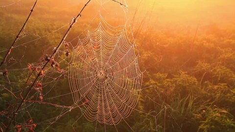 Spider web with drops of mist at dawn, beautiful bokeh