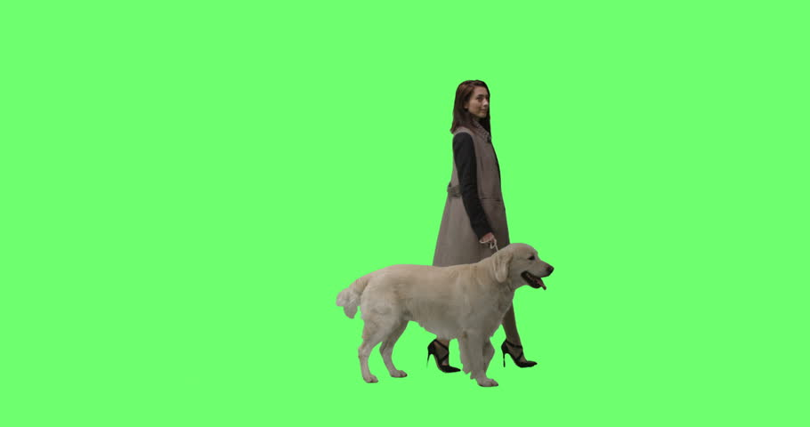 Fashionable Brunette Walks Her Labrador Retriever Dog on a Mock-up Green Screen Background. Shot on RED Cinema Camera in 4K (UHD).