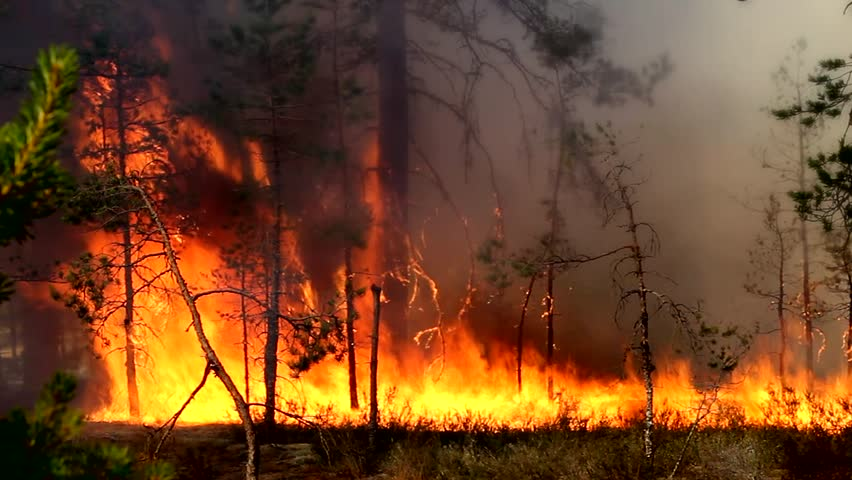 Forest fire - dangerous spontaneous natural disaster for the environment - the fire - the threat of large fires. Uncontrolled spread of fire for forest land.
