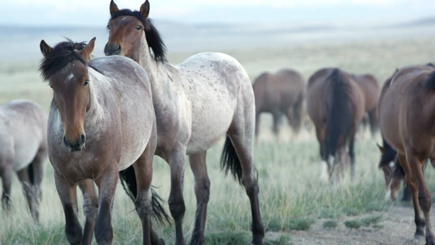 Up close view of wild horses grazing in the Utah desert. #29374813