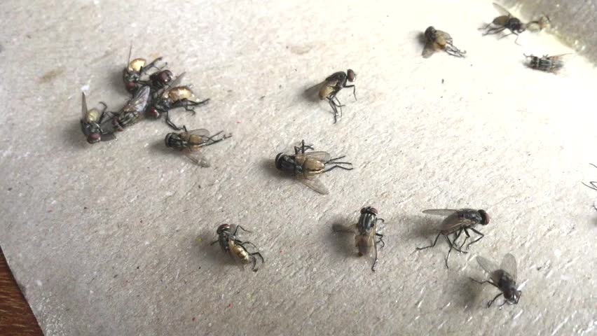 housefly trap clips.fly trap footage.
