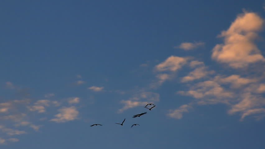 Birds flies in the sky at sunset