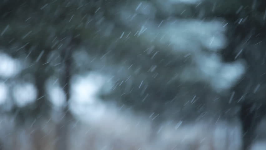 Snow falling with an intentionally blurry background of spruce trees for a dreamy winter look. - HD stock footage clip