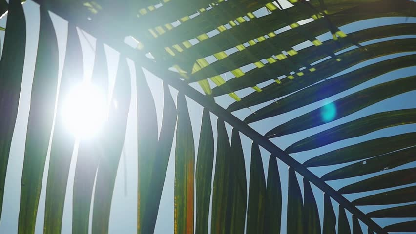 Sunshine through palm leaves with sun background with lens flare effects in slow motion. 1920x1080