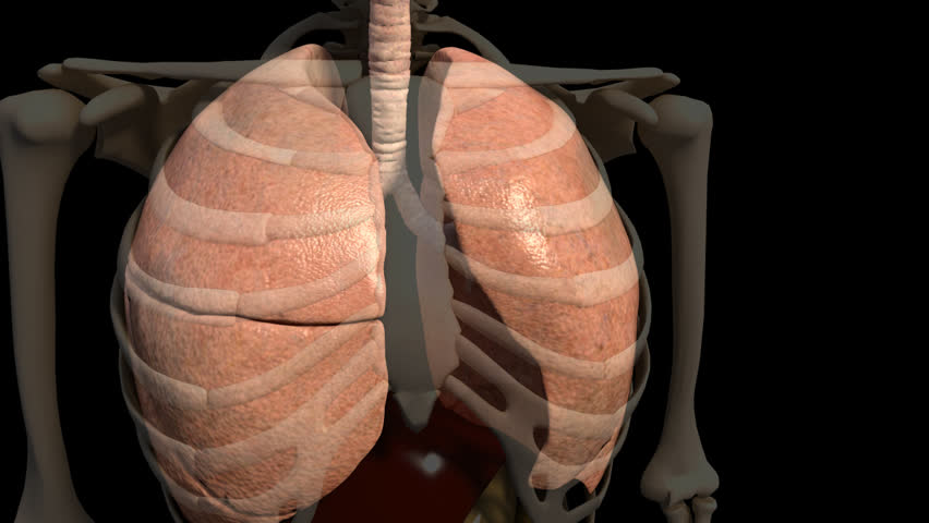 transparent 3D video of anterior human lungs breatthing, starting from left lung zooming out of abdomen and panning to right with introduction of necrotic tissue in black ue to smoking or emphysema