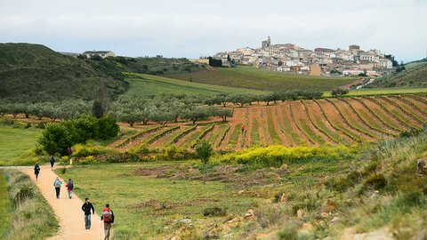 A pilgrims walking the camino de santiago in the fields with village Cirauqui in the background.