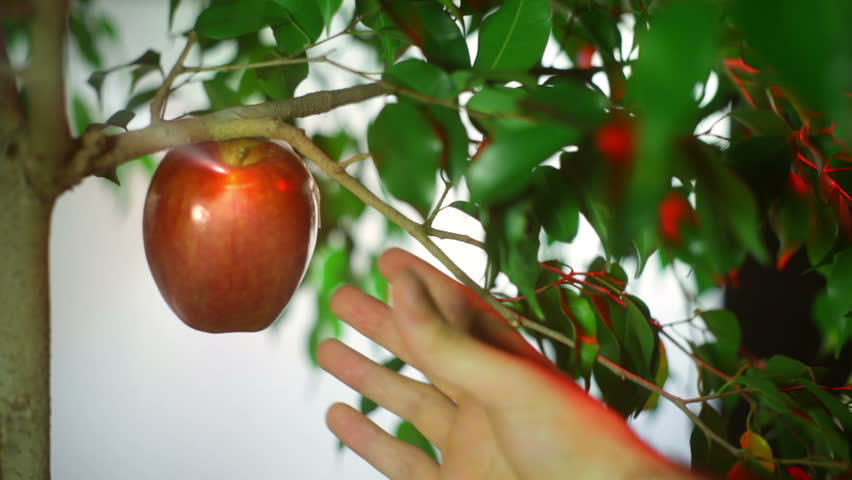 Fruit of knowledge, garden of eden story about satan tempting adam with the fruit of knowledge