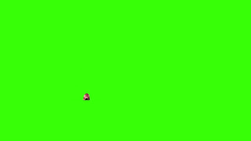 Giant Worm Monster Crawl Green Screen 3D Rendering Animation