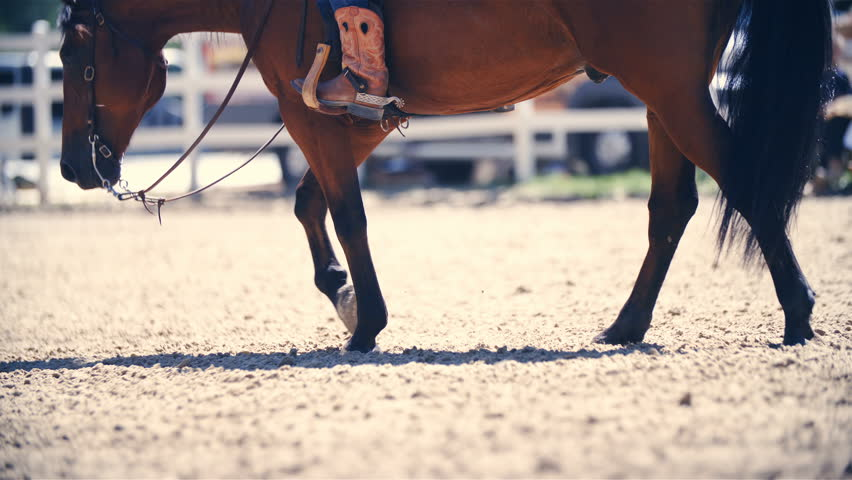 Relaxed horse riding in western boots slow mov 4K. Long shot slow motion of a brown quarter horse in focus slowly walking in riding arena. Side shot with cowboy boots in a stirrup. | Shutterstock HD Video #29878213