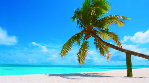 Fallen palm tree on the sandy beach, Maldives island, South Ari Atoll