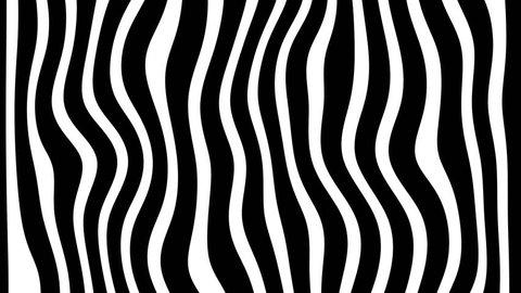 Line zebra movement animation background looped.
