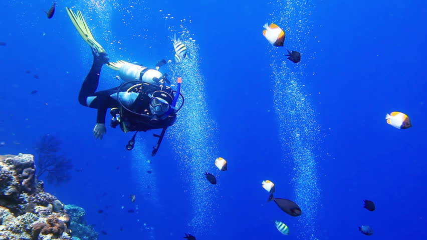 Diver makes OK sign in the blue with school of tropical fish on the coral reef
