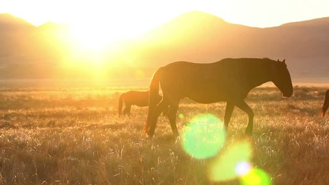 Sun peaking over the mountains as horse walks by in pasture.