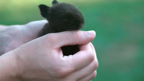 Small brown bunny resting in hands , (source: 5d mark iii raw)