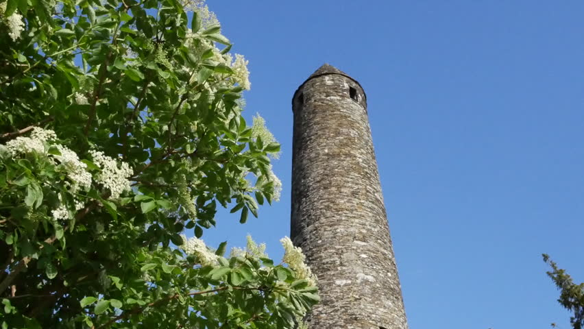 A round tower at Glendalough rises above a blooming elderflower shrub.