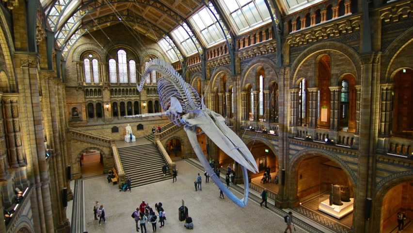 London, United Kingdom. Circa August 2017.Timelapse of tourists watching the blue whale skeleton in the main hall of the Natural History Museum of London.