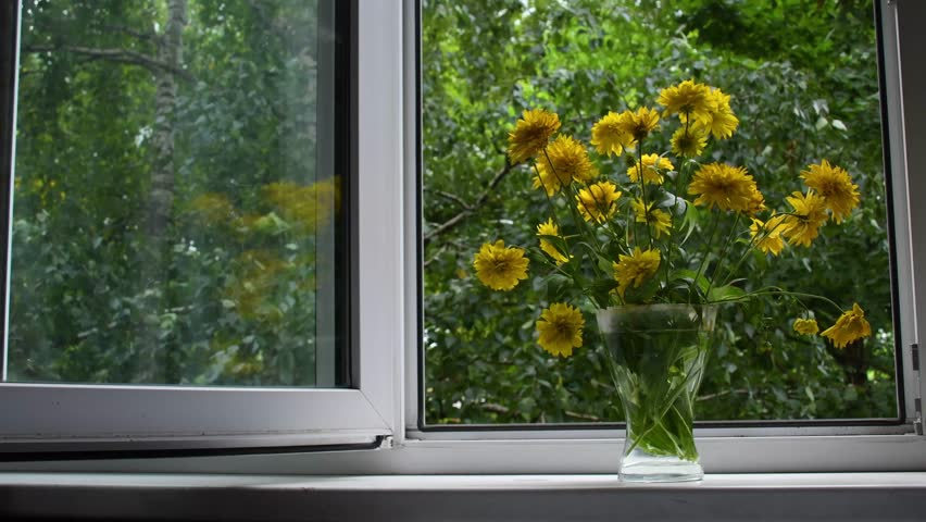 Bouquet of yellow Rudbeckia laciniata flowers (also known as cutleaf, cutleaf coneflower, goldenglow, tall coneflower, green-headed coneflower and thimbleweed) against open window in sunny summer day.