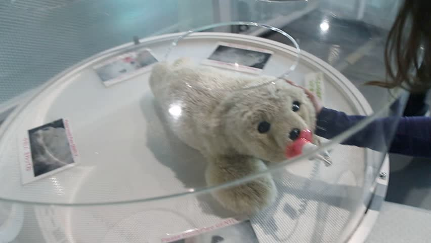 TOKYO, JAPAN APRIL 15, 2013. View on therapeutic interactive Cute Baby Seal Robot in Miraikan. PARO is designed to have a positive psychological effect on people who interact with it.