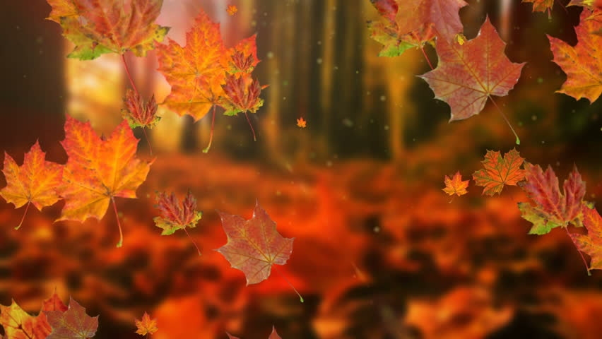 Autumn leaves falling in slow motion and sun shining through fall leaves. Beautiful landscape background. | Shutterstock HD Video #30655882