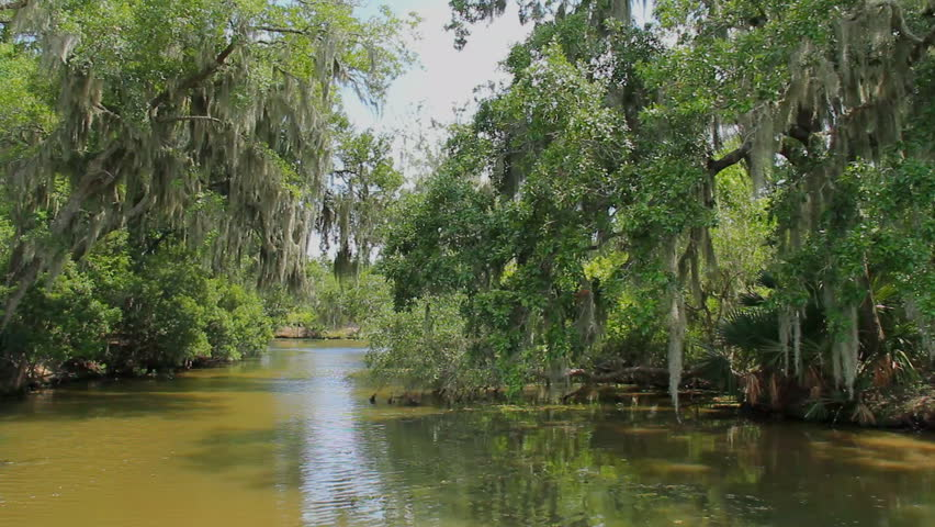 Bayou Swamp 2. Drifting through a swampy bayou in Louisiana near New Orleans.