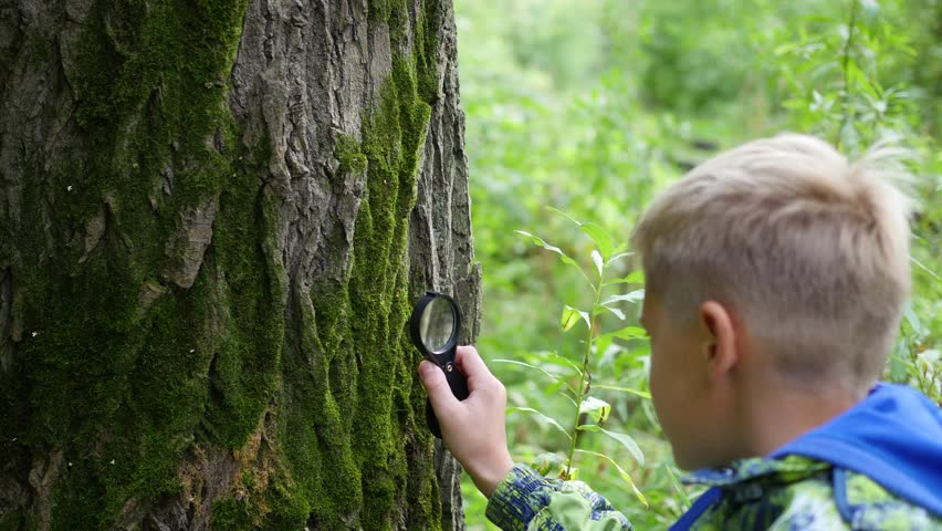 Schoolboy in the Park studies of plants and nasekomye through a magnifying glass. Study of the outside world, pre-school and school education | Shutterstock HD Video #30720253