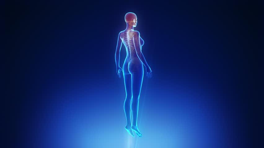 Female body scan in loop  | Shutterstock HD Video #3073030
