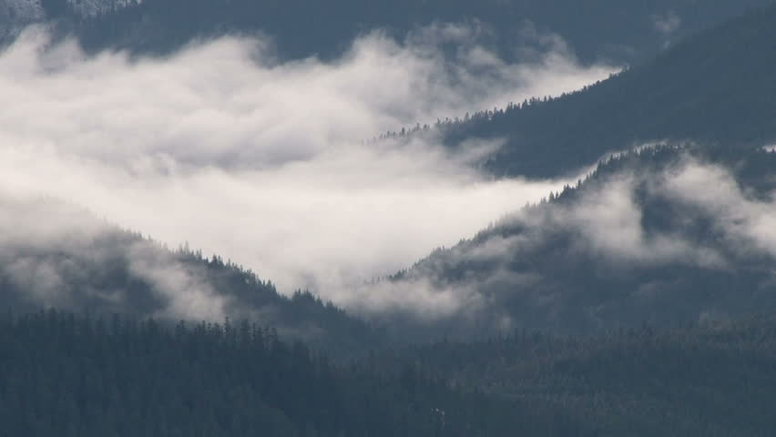 Clouds hover through Pacific Northwest forest. #3077584
