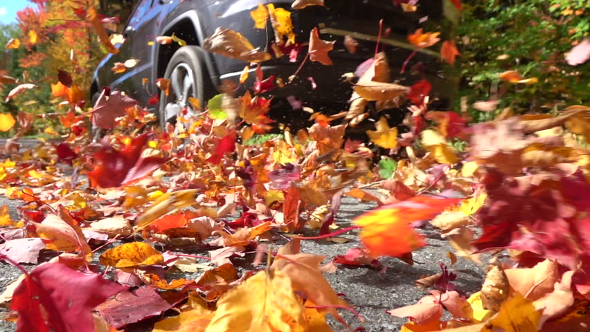 SLOW MOTION CLOSE UP: Black SUV car driving on empty forest road over bright autumn leaves. Colorful fall foliage dancing behind a car driving over on forest road. Car swirling beautiful autumn leaves