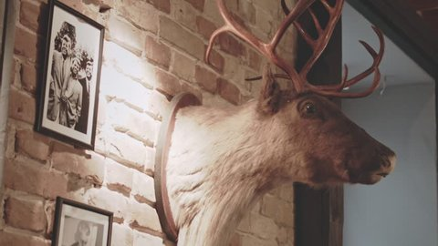 Stuffed animal with antlers. Deer head on wall. Hunter trophy. Close up of stuffed deer and old photographs hanging on brick wall. Stuffed deer head.