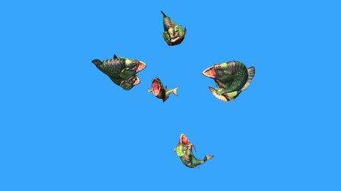 Group Fish Piranha Attack Top Blue Screen 3D Rendering Animation