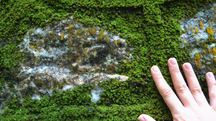 Hand Touching Stone Wall with Moss