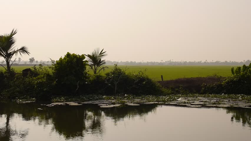 View from a moving houseboat on a canal looking over rice fields on the backwaters of Alleppey in the State of Kerala, Southern  India