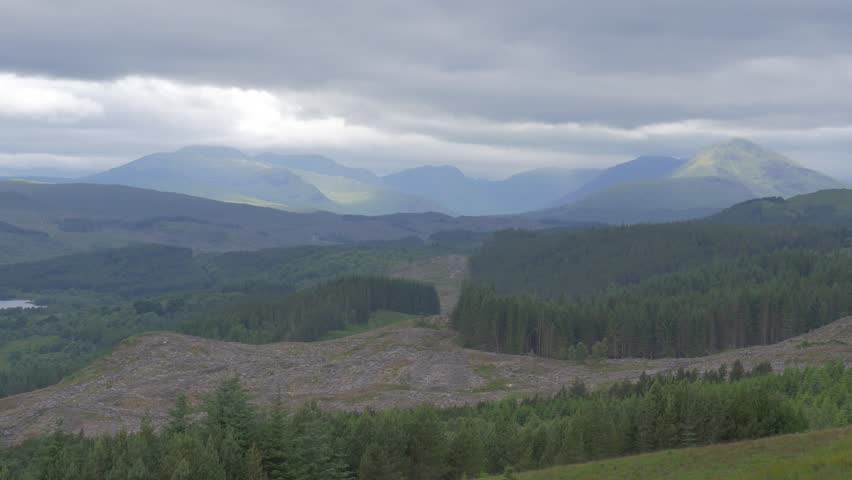 Highlands, Scottish Forest - Ungraded Version - 4K stock footage clip