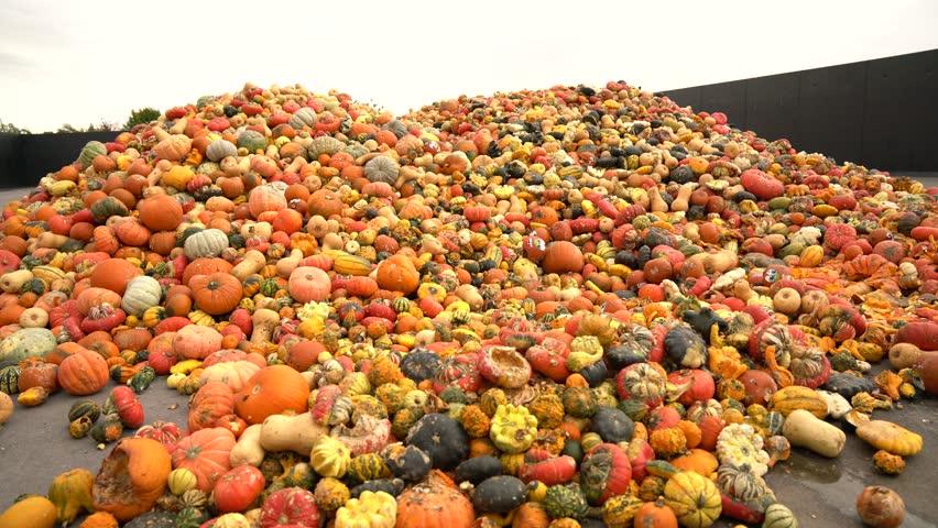 Food over production. Pumpkins, waste dump. 4K Video footage
