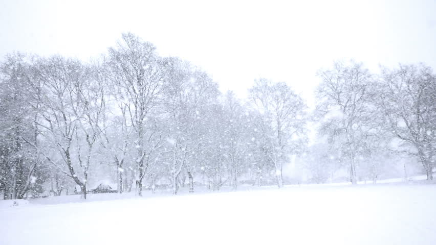Falling snow in a winter park with snow covered trees, slow motion, filmed at 60p