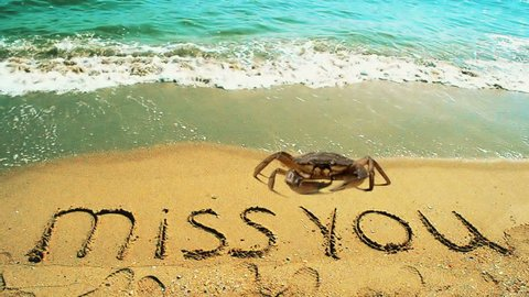 Crabs on the beach. The inscription miss you on sand.