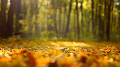 Autumn Scene. Falling colorful Leaves. Trees in autumnal Park. Fall. Autumn colorful park. Slow Motion Ultra high definition 3840X2160 4K UHD video footage