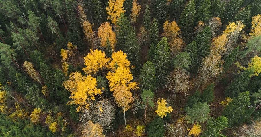 Aerial view of autumn forest green and yellow trees, road and lake shore line. Drone flying forward above treeline and filming down. Kangasala, Finland.