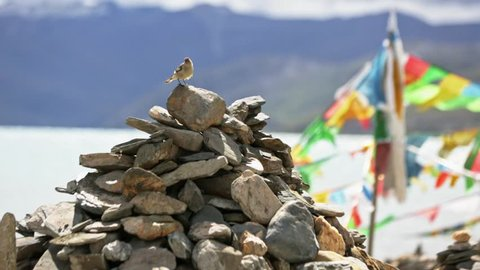 Prayer flag.The bird takes off from a pile of stones. Tibet