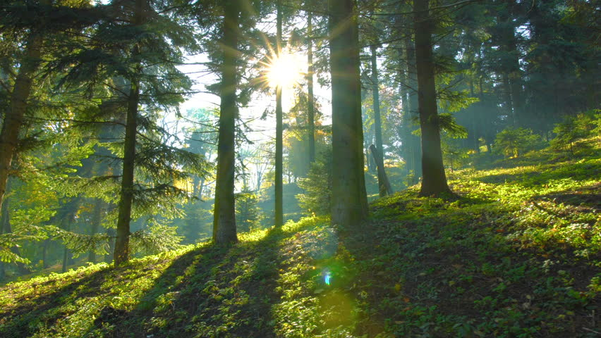 Magical mountain forest with the trees growing on hills . Warm sunbeams illuminating the trunks and lovely plants. Gimbal shot with parallax effect. #32083633