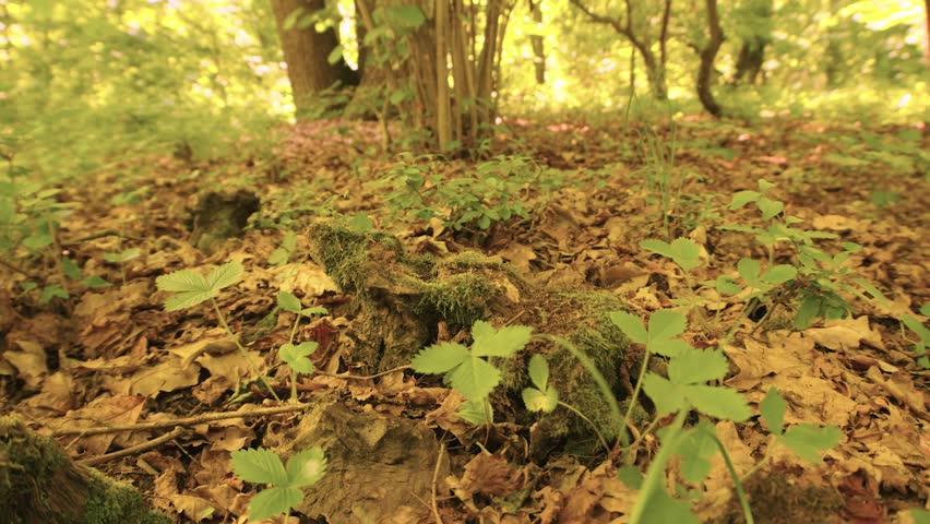 A walk through the enchanted forest | Shutterstock HD Video #32258953