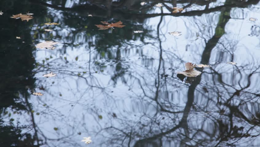 Autumn leaves on water reflections