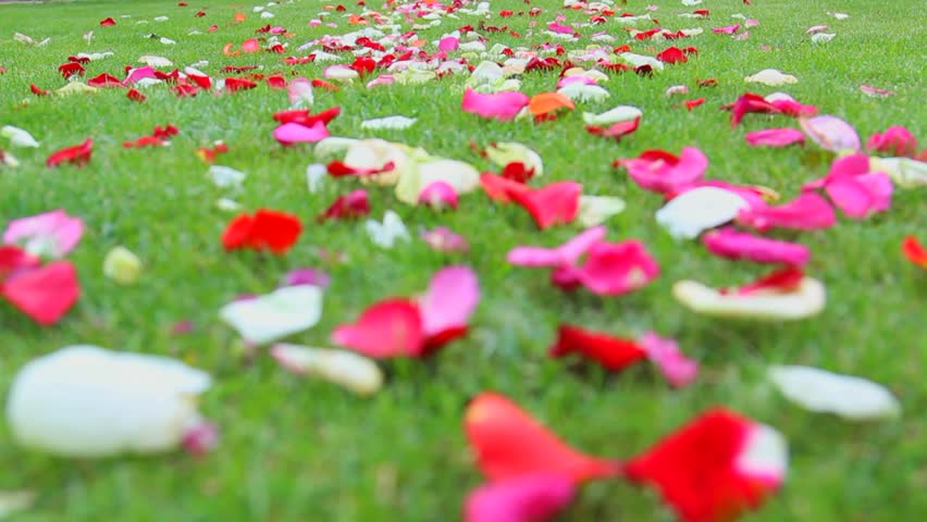 Image result for green grass and roses