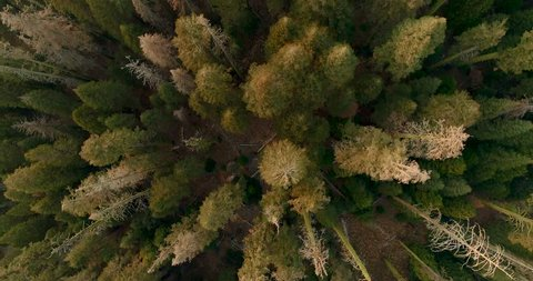 Flight over the Sequoia National Park, look at the bottom. Sunrise. Sunset. Sequoia National Park. 4K. Drone. November 2017