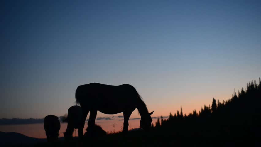 Silhouettes of horses in the field. sunset   Shutterstock HD Video #3307403