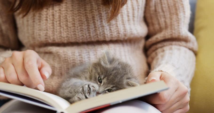 Kitten reading