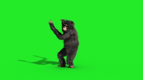 Chimpanzee House Dance Dancer Green Screen 3D Rendering Animation Animals