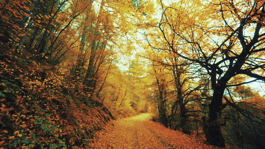 Offroad Drive On Amazing Leaf Paved Autumn Forest.A mesmerising trail of a virgin Northern Greek forest, paved with fallen red yellow and brown leaves in all of its autumnan beauty.